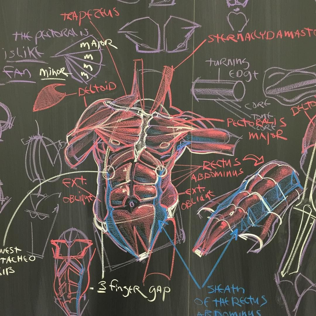 By Will Weston Study Pinterest Anatomy Drawings And Concept Art