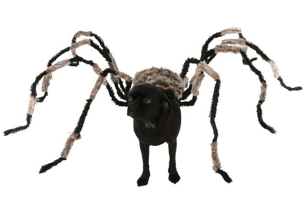 Diy Spider Dog Costume Halloweencostumes Com Blog Dog Spider