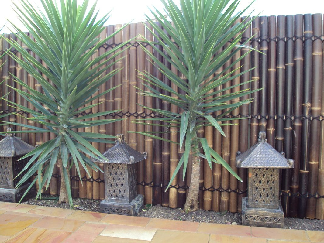bamboo wall with yakkas | outdoor diy | pinterest | bamboo wall