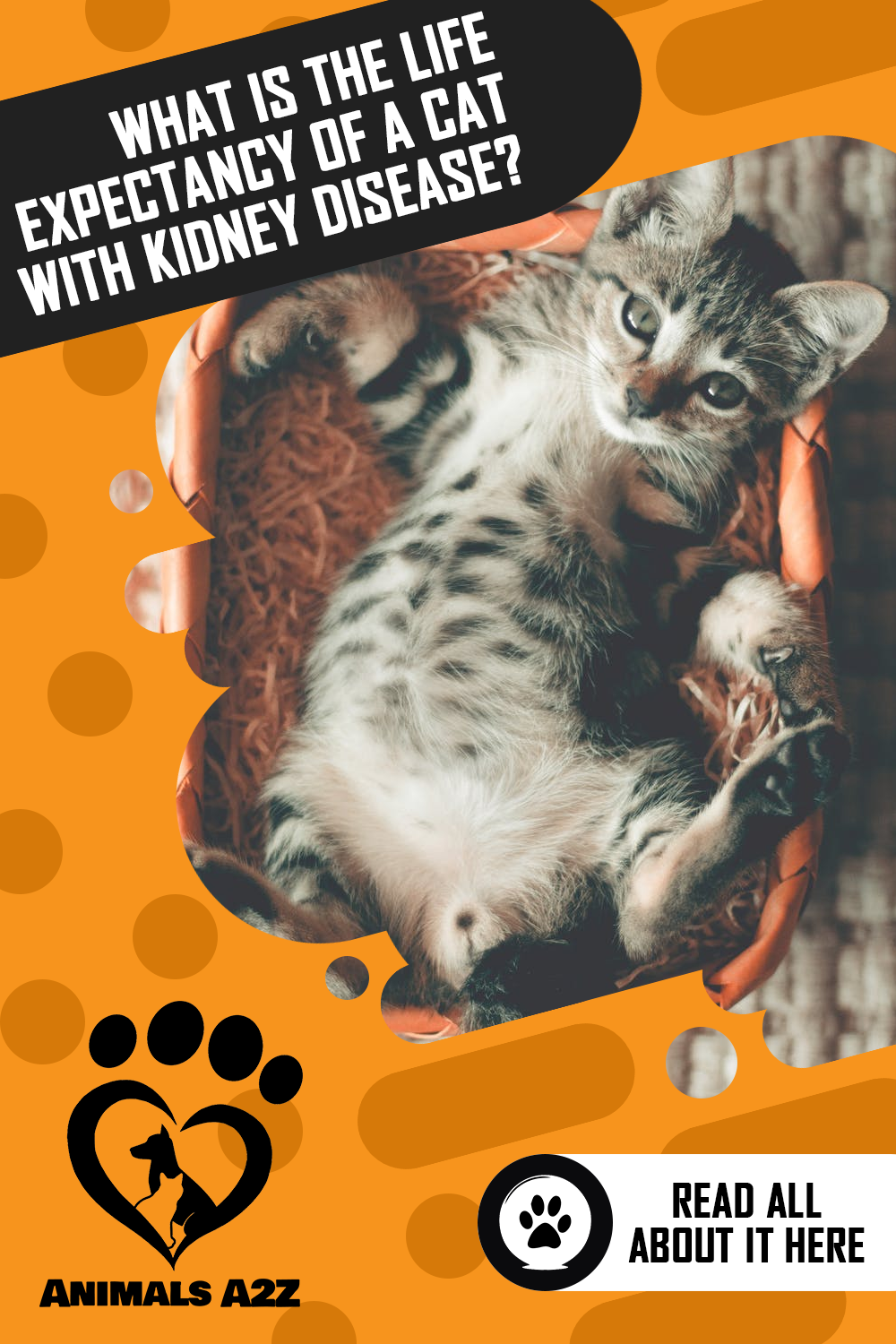What Is the Life Expectancy of a Cat with Kidney Disease