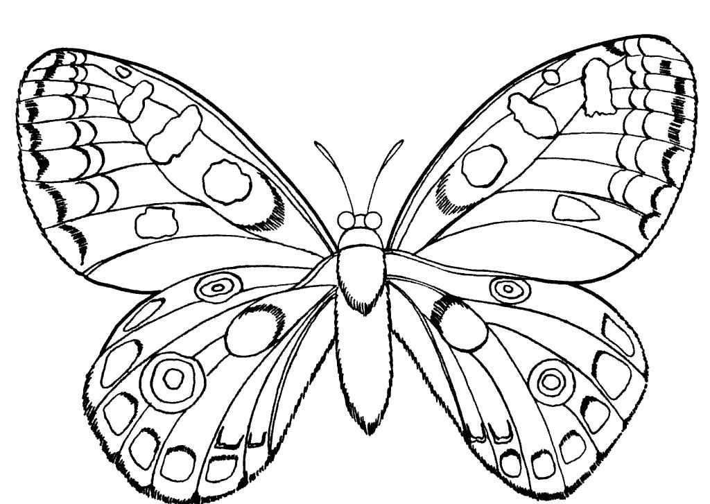 butterfly and insect coloring pages httpwwwkidscpcom - Insect Coloring Pages