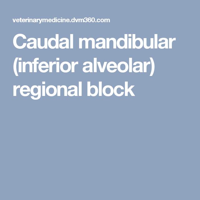 Caudal mandibular (inferior alveolar) regional block