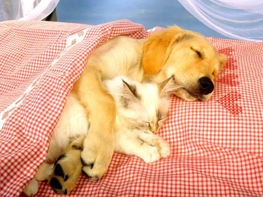 картинки со спящими животными фото можно