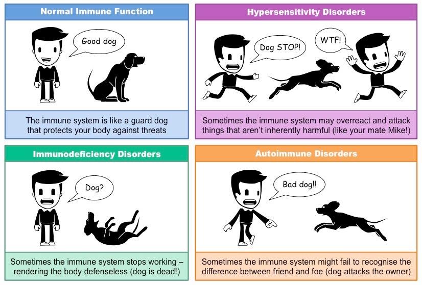 Immune Disorders Bioninja Disorders Hypersensitivity Cytotoxic Drug