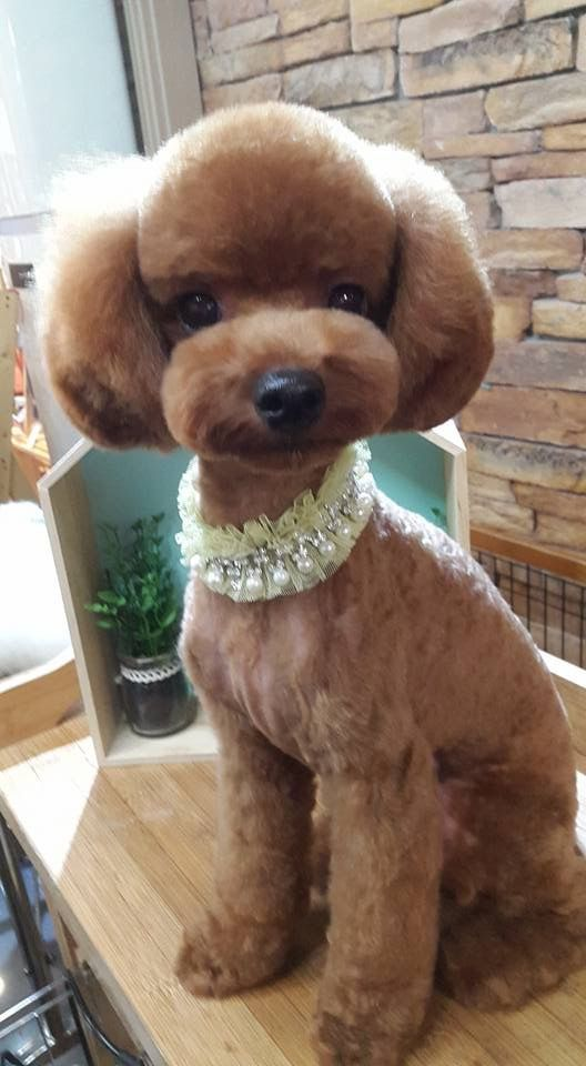 Found On Google From Pinterest Com Dog Grooming Styles Dog Grooming Salons Dog Grooming Tools