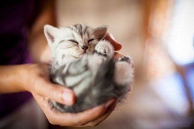 Little kitten laying in hands