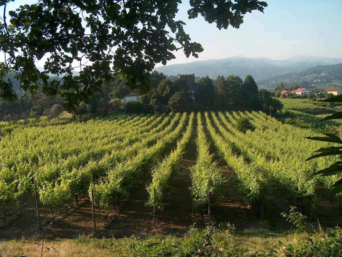 Vinho Verde Wine, Portugal - Google Search