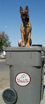 #dog #dog training