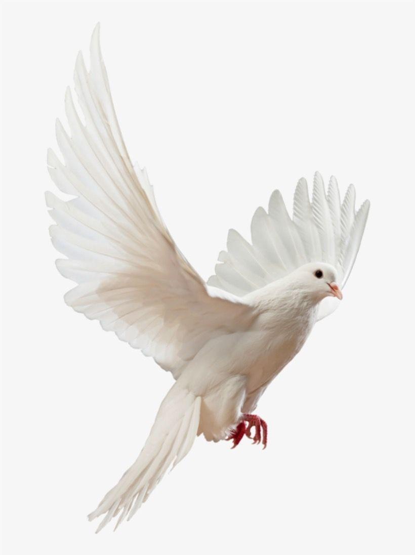Fantastico Fotos Aves Volando Png Conceptos Number Heredamos Manhattan Project Tierra Del Aves Volando Aves Fotos De Aves