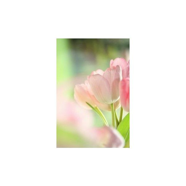 pink and green ❤ liked on Polyvore featuring flowers