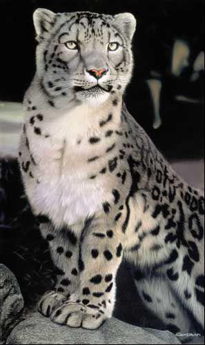 Leopardo de las nieves | snow leopard | Pinterest | La nieve, Nieve ...