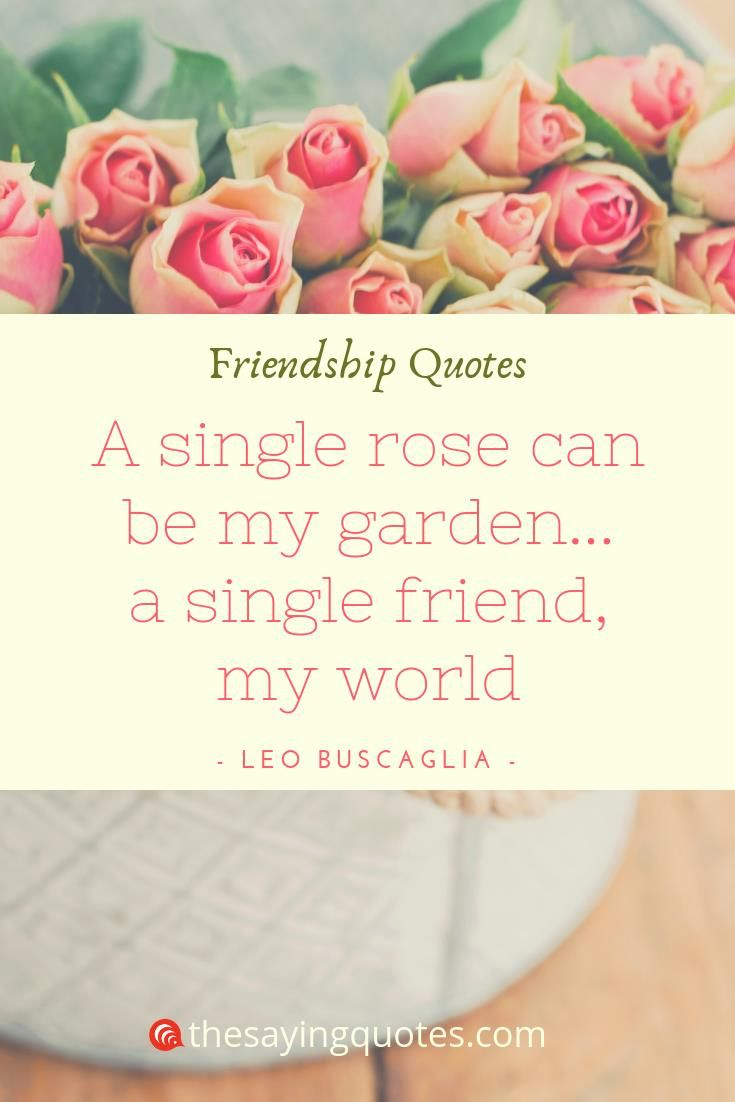 Best Friendship Quotes With Beautiful Images Friendship