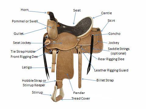 Blank diagram of saddle trusted wiring diagram horsemanship western saddle parts horsemanship pinterest rh pinterest ca western horse saddle diagram english saddle parts ccuart Choice Image