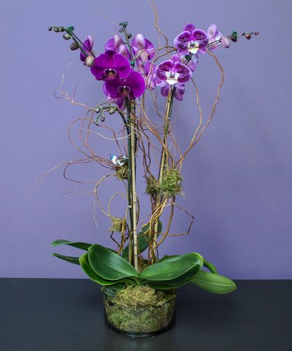 Fairytale Orchids Same Day Flower Delivery Flower Delivery Orchids