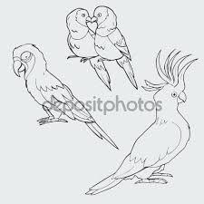 """Képtalálat a következőre: """"ara papagáj rajz"""""""