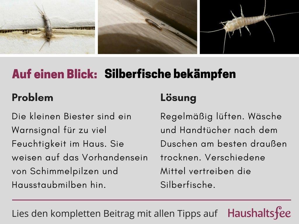 Silberfische Bekampfen Beste Tipps Tricks Naturgarten