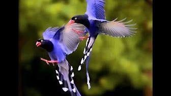 Canto de Pássaros Silvestres e Exóticos 55 Cantos 🐤 - YouTube