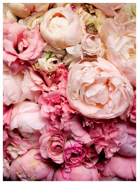 Perfect peonies pink wedding ideas pinterest cabbage roses perfect peonies mightylinksfo