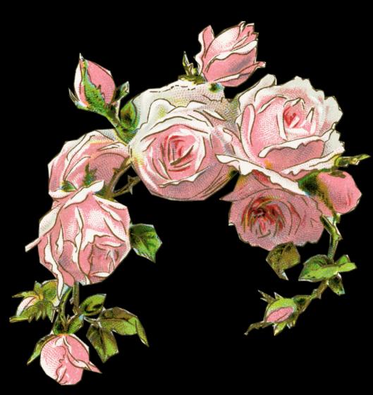 clipart english rose - photo #23