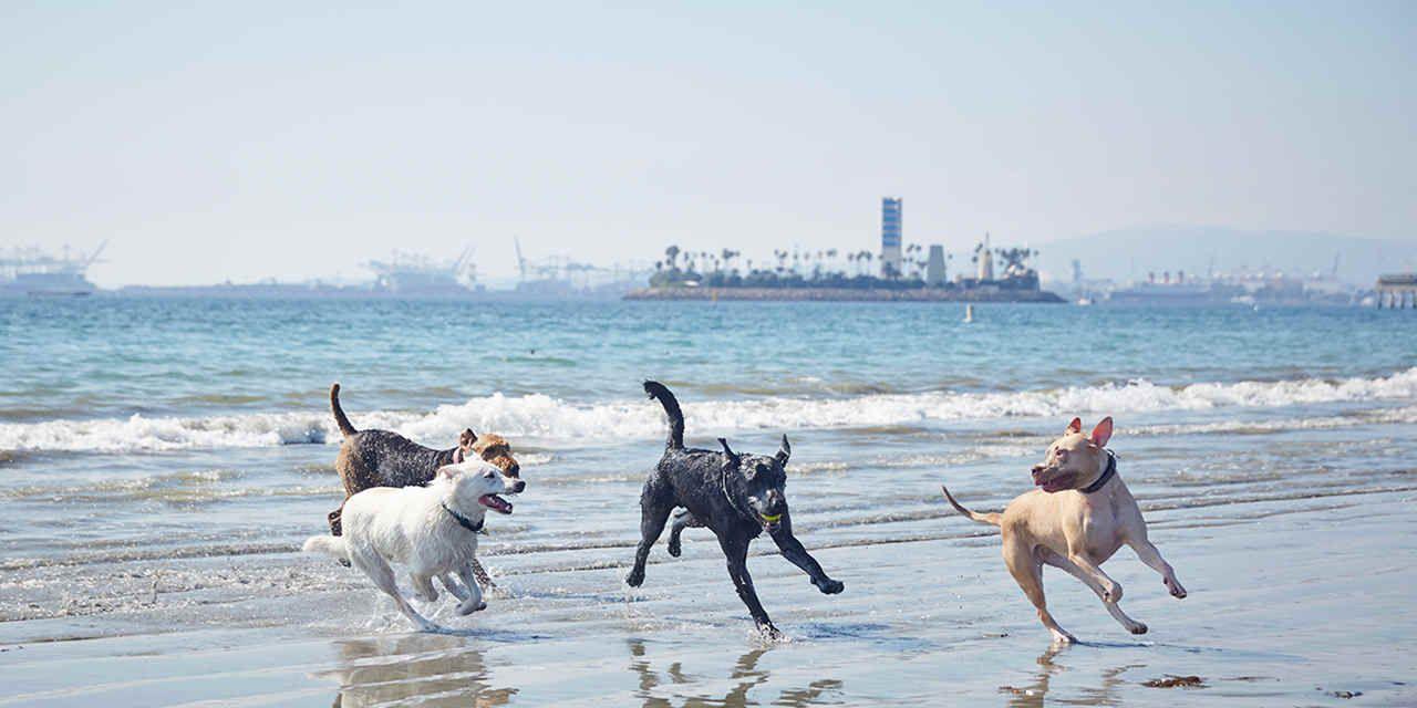 11 Great Dog Beaches Dog Friendly Beach Dog Beach California Dog