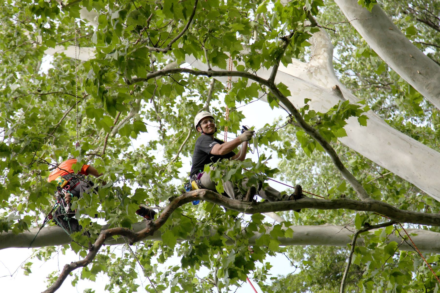 International Society of Arboriculture Midwest Chapter