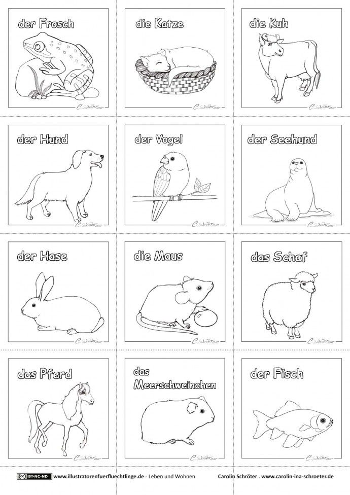 Haustiere Tiergestutzte Padagogik Kindergartenthemen Haustiere