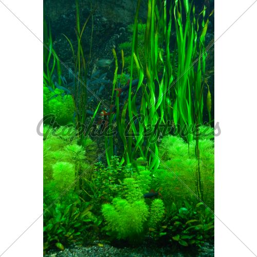 Background Of The Green Aquarium Seaweed Underw...
