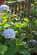TARA DILLARD: Elements of a Garden: What do you see?