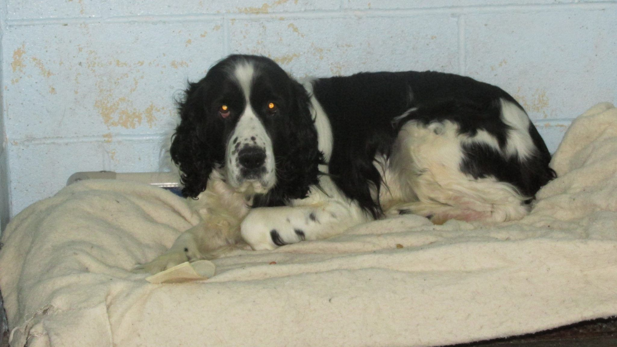 Preston Animal Control Page Liked 3 Hrs Found Today In Preston