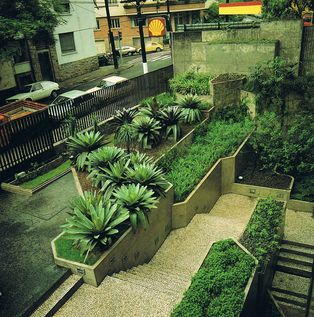 roberto burle marx plants - Google Search