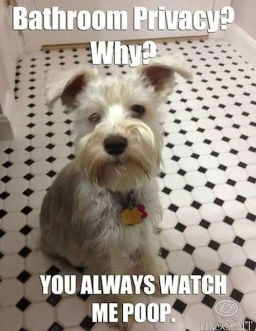Funniest Pictures Of The Week Funny Animal Pictures Funny Animals Funny Dog Pictures
