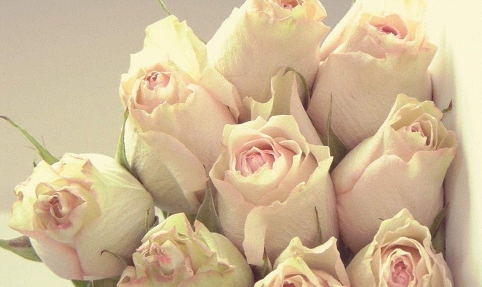 Beauty Pink Flowers Soft Roses Desktop Flower Wallpaper Download ...