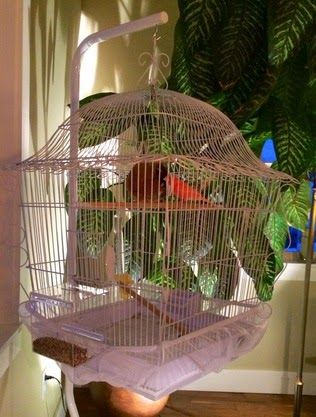 Hanging Parakeet Bird Cage With A Canary Inside