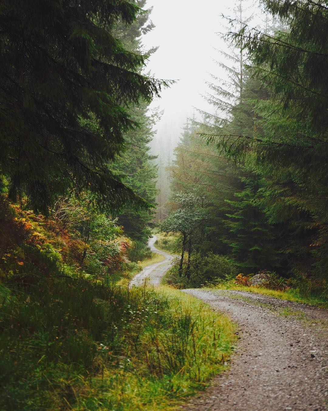 The Forest Paths Around The Trossachs On A Rainy And Quiet Morning Nature Scotland Landscape Hi Forest Path Nature Photography Beautiful Photography Nature