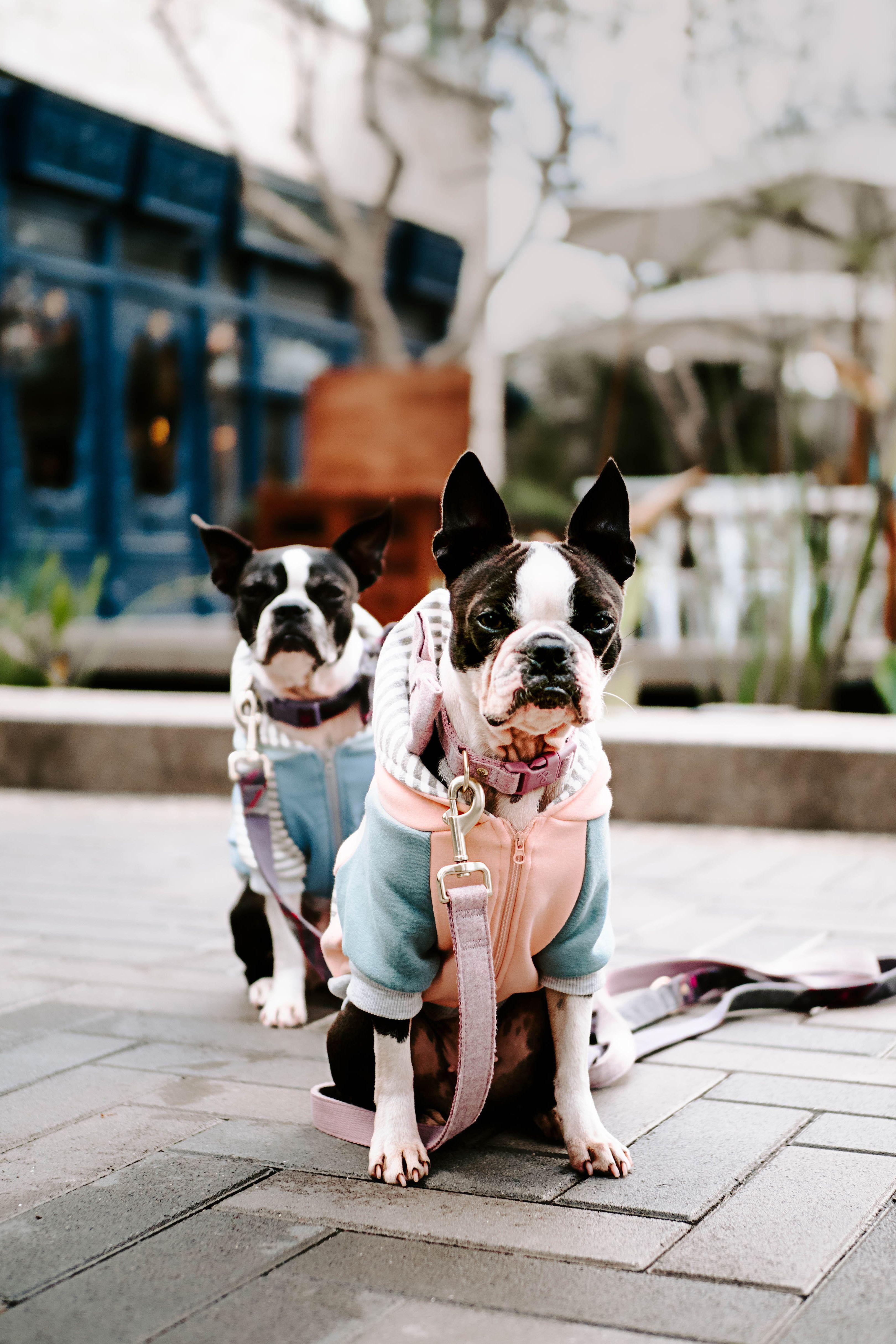 It S Sunny Day And Walking Day Dogs Pets Doglovers Animals Dog Leash Training Dog Training Near Me Guard Dog Training