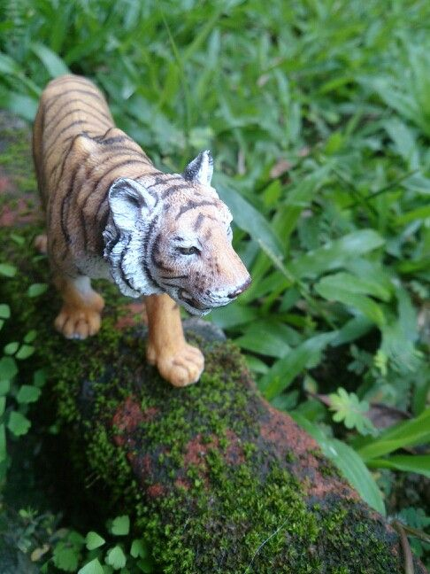Save Asian Tiger