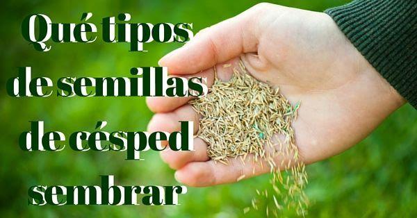 Qu tipos de semillas de c sped sembrar qu semillas de - Como plantar cesped en el jardin ...