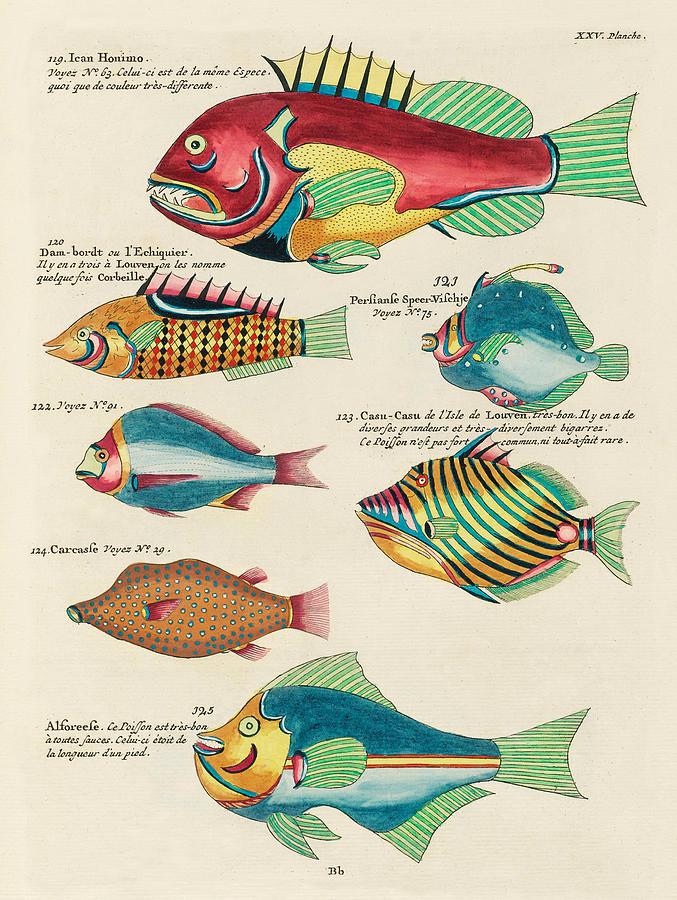 Vintage Whimsical Fish And Marine Life Illustration By Louis Renard Ican Honimo Casu Casu By Louis Renard Fish Painting Fish Artwork Fish Illustration