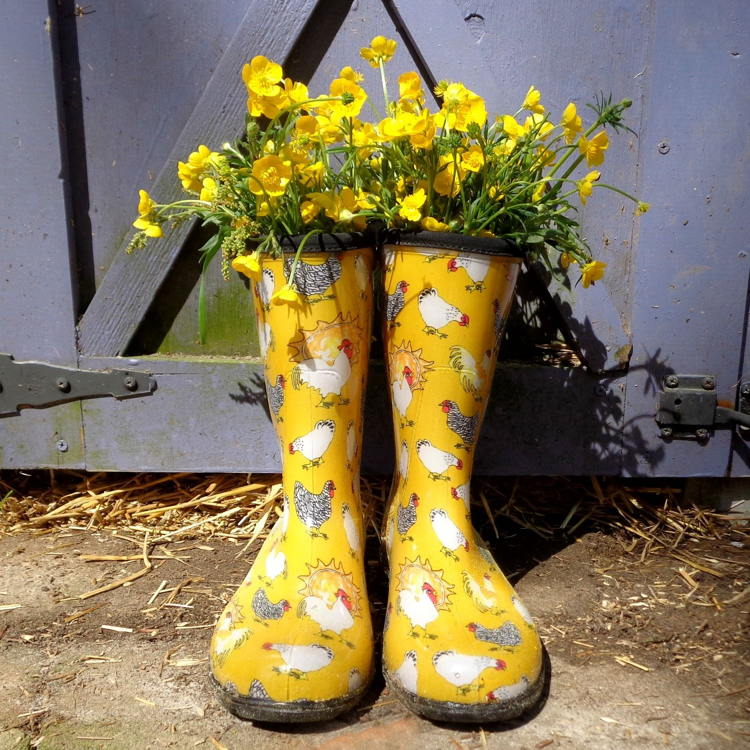 Chicken Muck Boots are here from Sloggers! http://www.sloggers.com ...