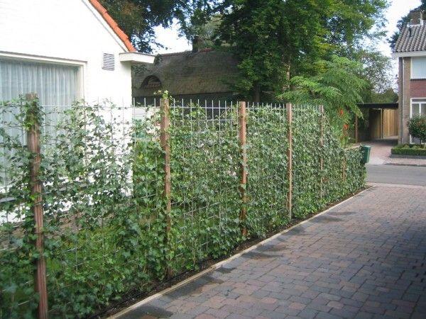 terug naar tuinafscheiding project 3 van 13 vorige volgende green tr dg rd ideer. Black Bedroom Furniture Sets. Home Design Ideas