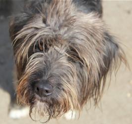 Adopt Mason On Dog Sounds Tibetan Terrier Terrier Dogs