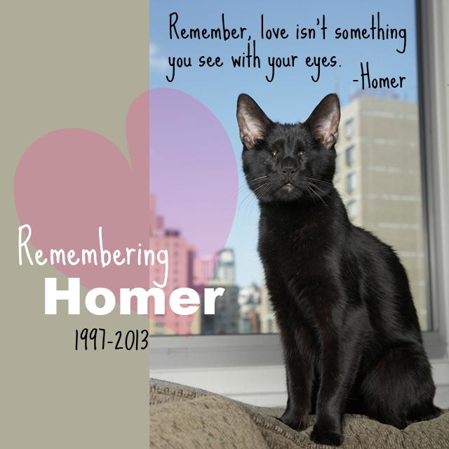 Enjoyable Homer Blind Cat Otrb Cats Homer Odyssey Animals Download Free Architecture Designs Itiscsunscenecom