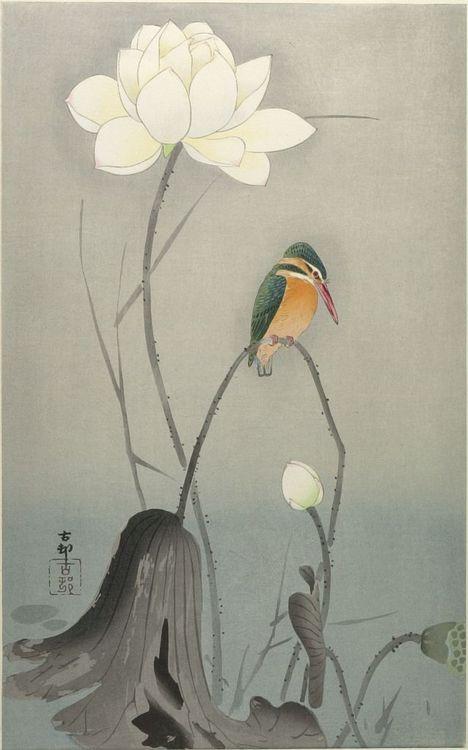 Kingfisher with Lotus Flower  Ohara Koson