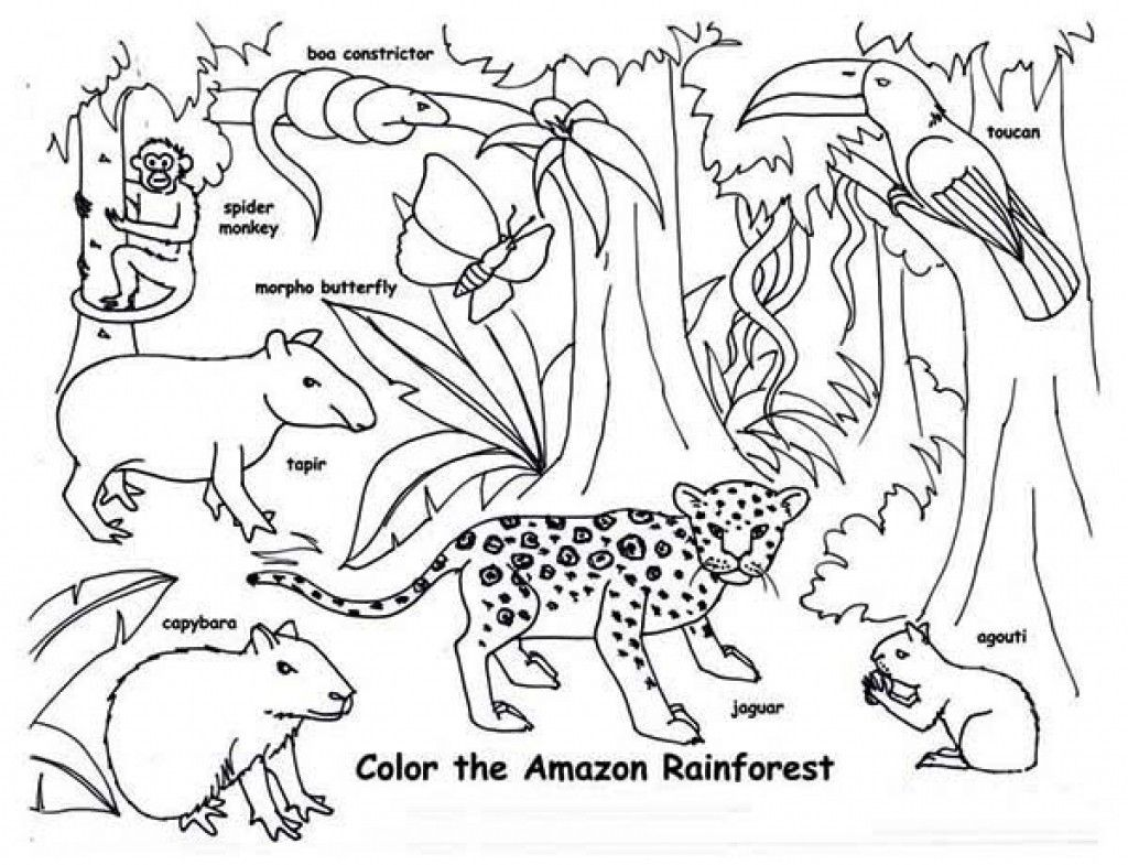Tropical Rainforest Animal Colouring Pages Gambar