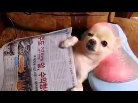 This Cool Dog Massage Youtube Cute Puppies Cute Animals
