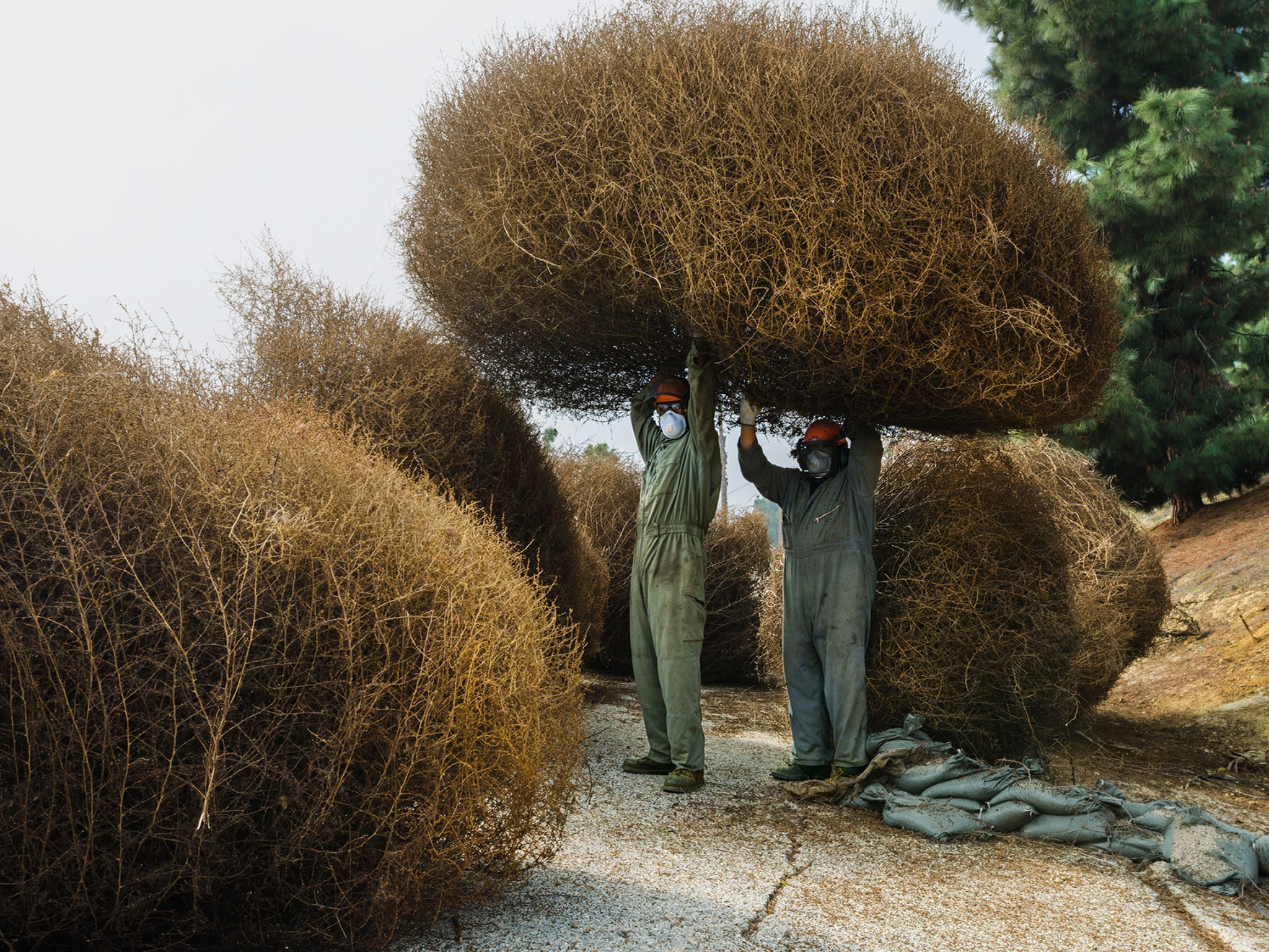 Pictures We Love Invasion Of The Tumbleweeds Funny Pictures Pictures Funny
