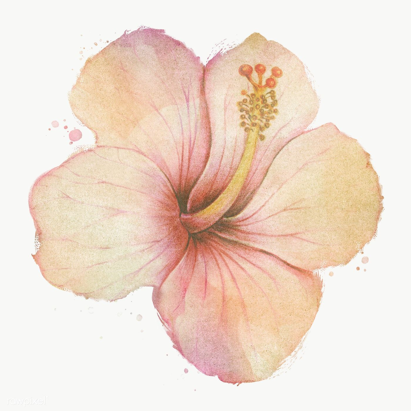 Hand Drawn Beige Hibiscus Flower Watercolor Style Design Element Free Image By Rawpixel Com In 2020 Watercolor Flowers Watercolor Flower Background Hibiscus Flowers