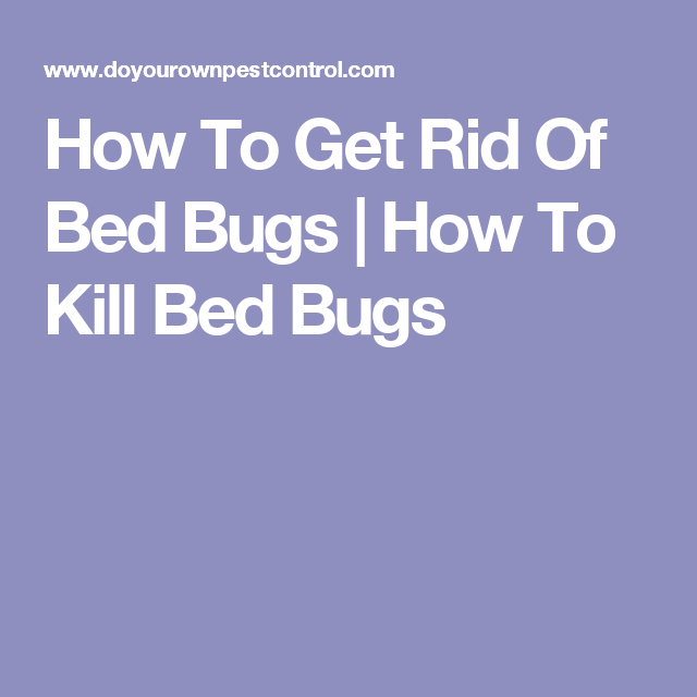 How to get rid of bed bugs how to kill bed bugs health issues how to get rid of bed bugs how to kill bed bugs ccuart Choice Image