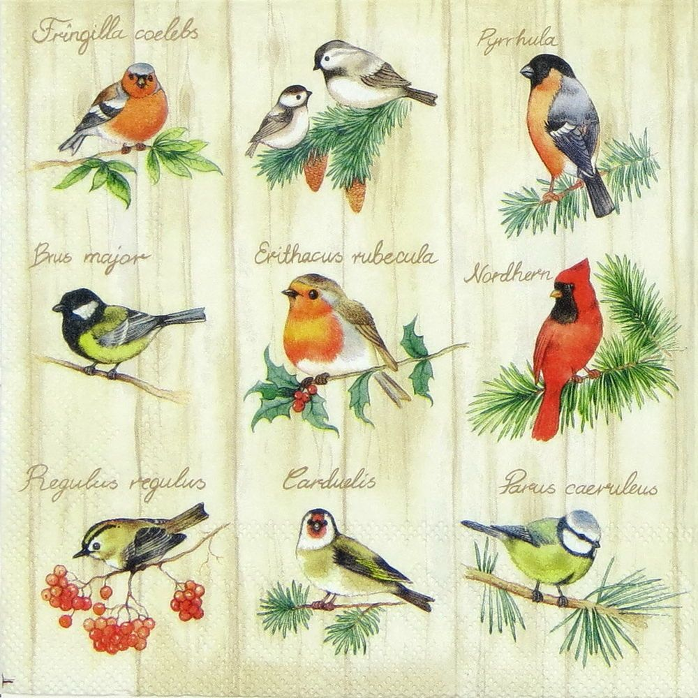 4x Paper Napkins for Party Lovely Robins Decoupage Craft