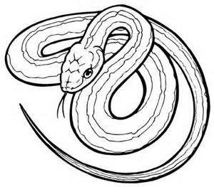 Simple Snake Outline Drawings At T Yahoo Image Search Results